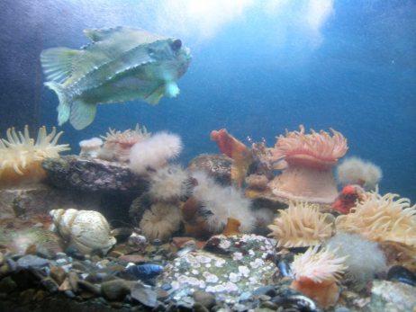 L'aquarium et ses poissons